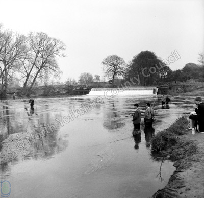 Fishing, River Derwent, Stamford Bridge